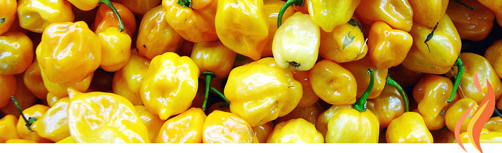 2016VTJF-website-yellow-pepper